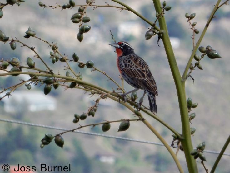 bird-paute-1