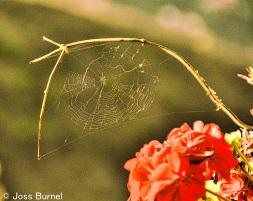 spider-web-1